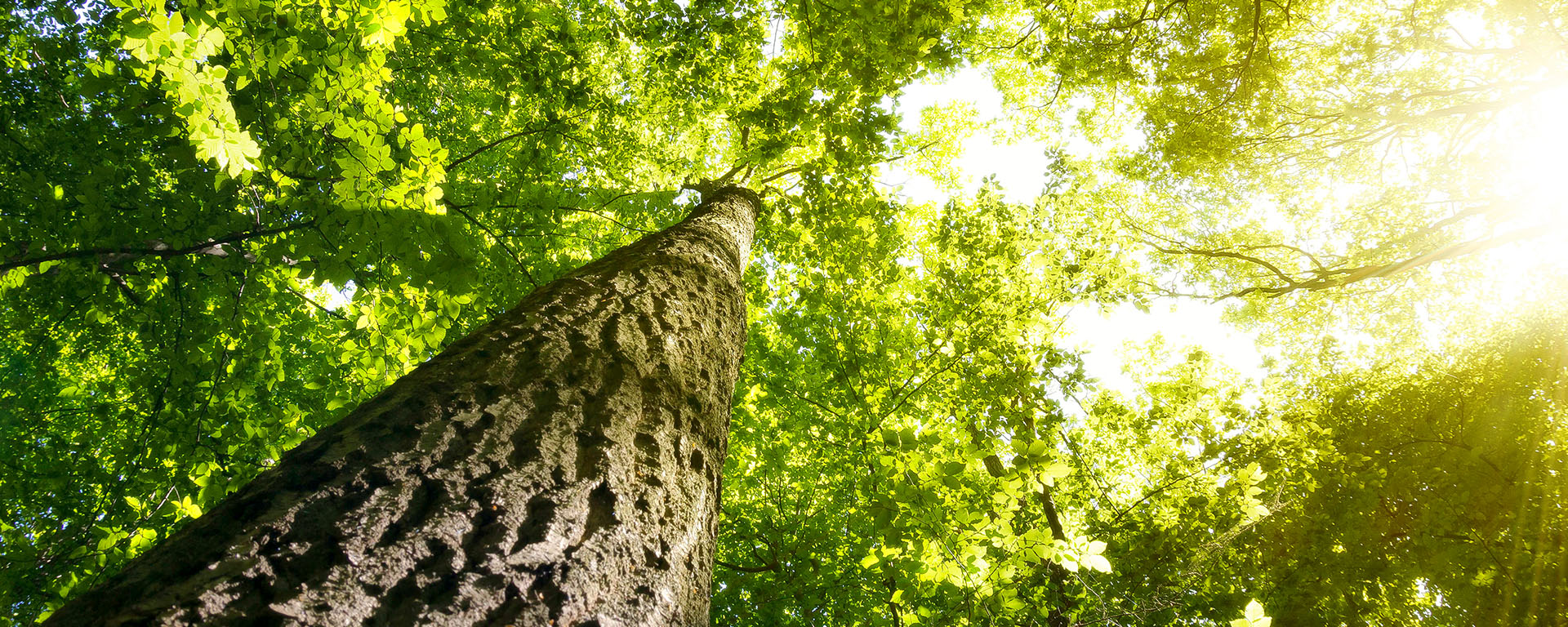 Mais de 30 mil novas árvoresnativas plantadas